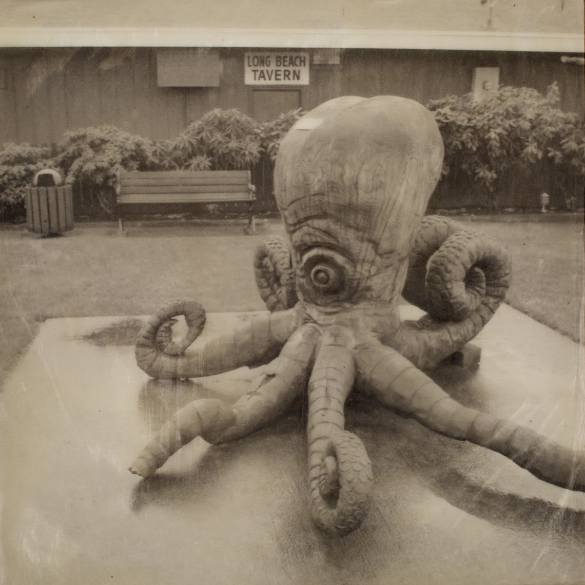 Long Beach, Octopus