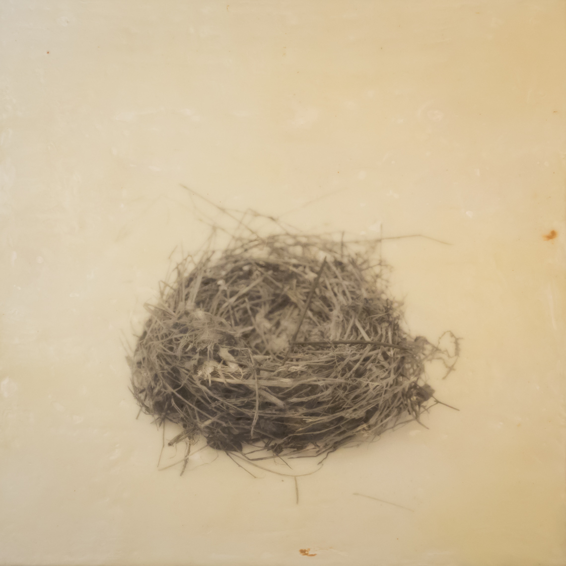 nest_encaustic_1