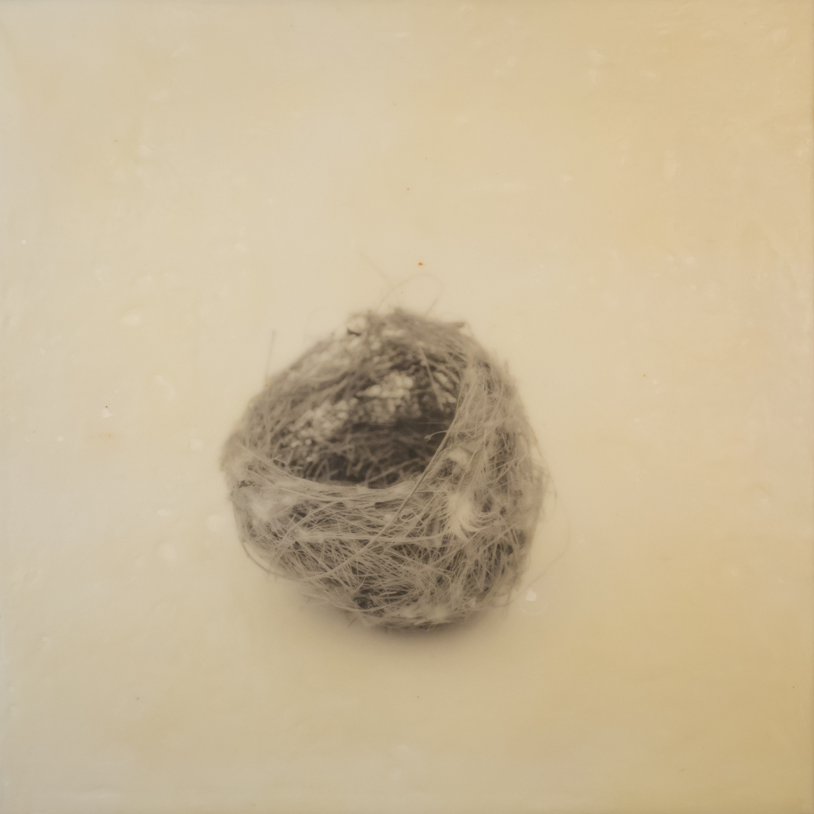 nest_encaustic_10