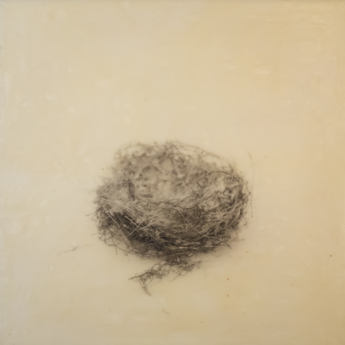 nest_encaustic_12