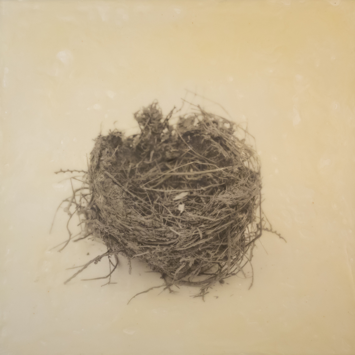 nest_encaustic_2