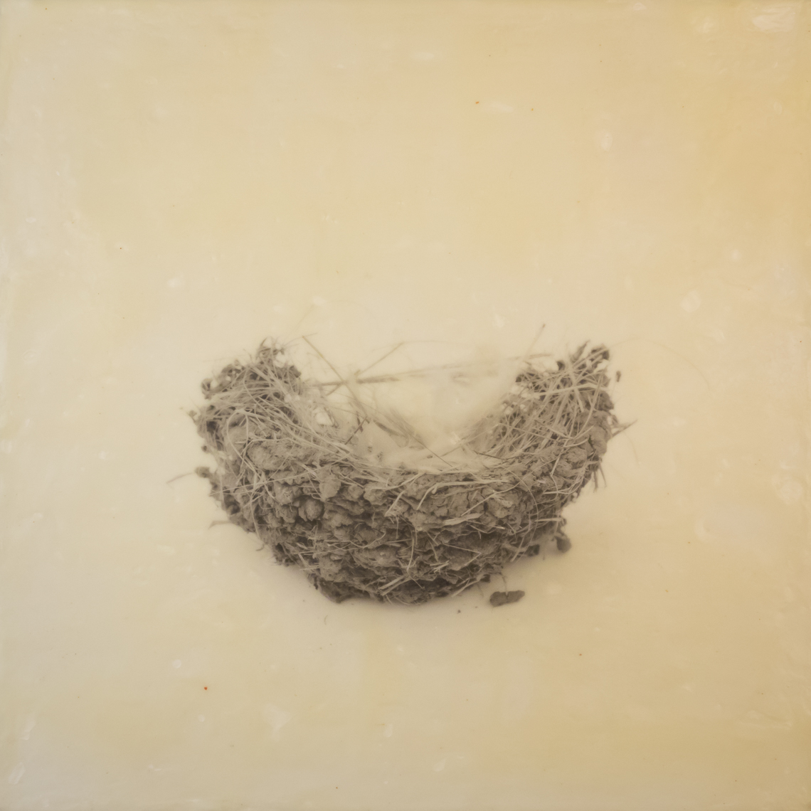 nest_encaustic_4