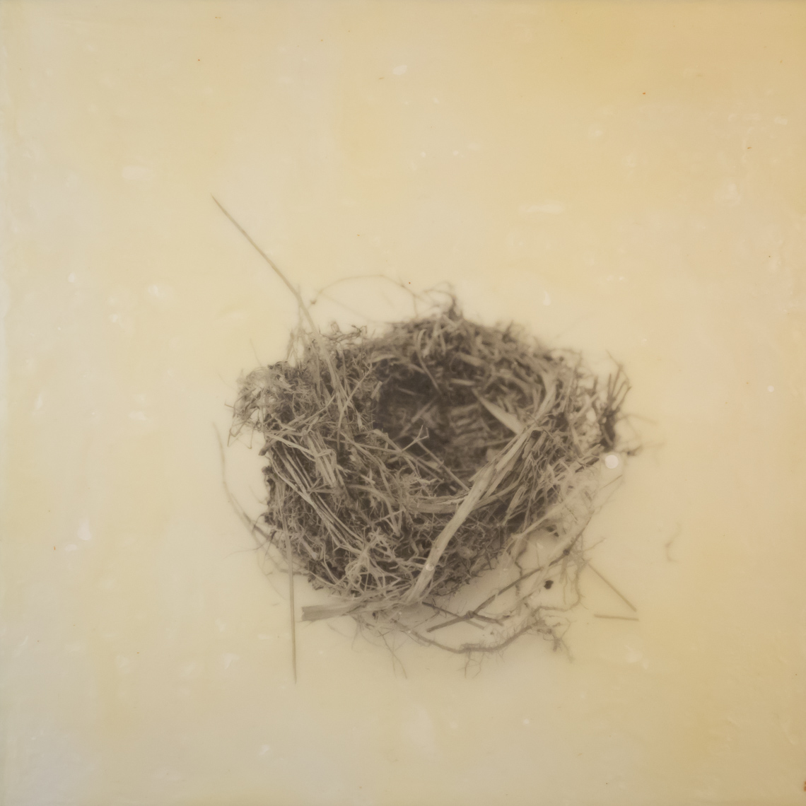 nest_encaustic_5