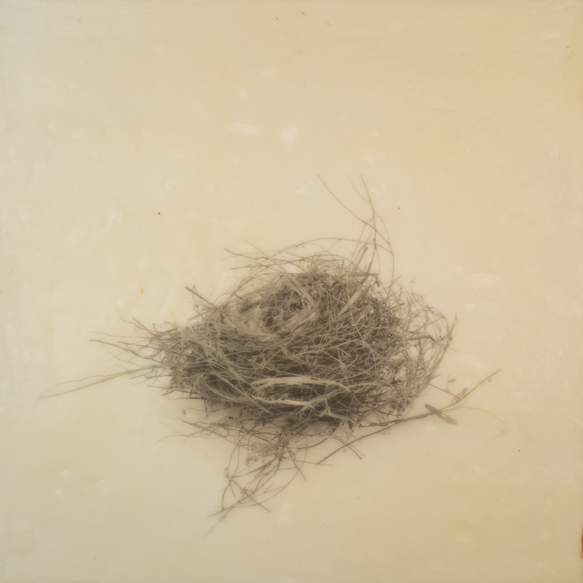 nest_encaustic_6