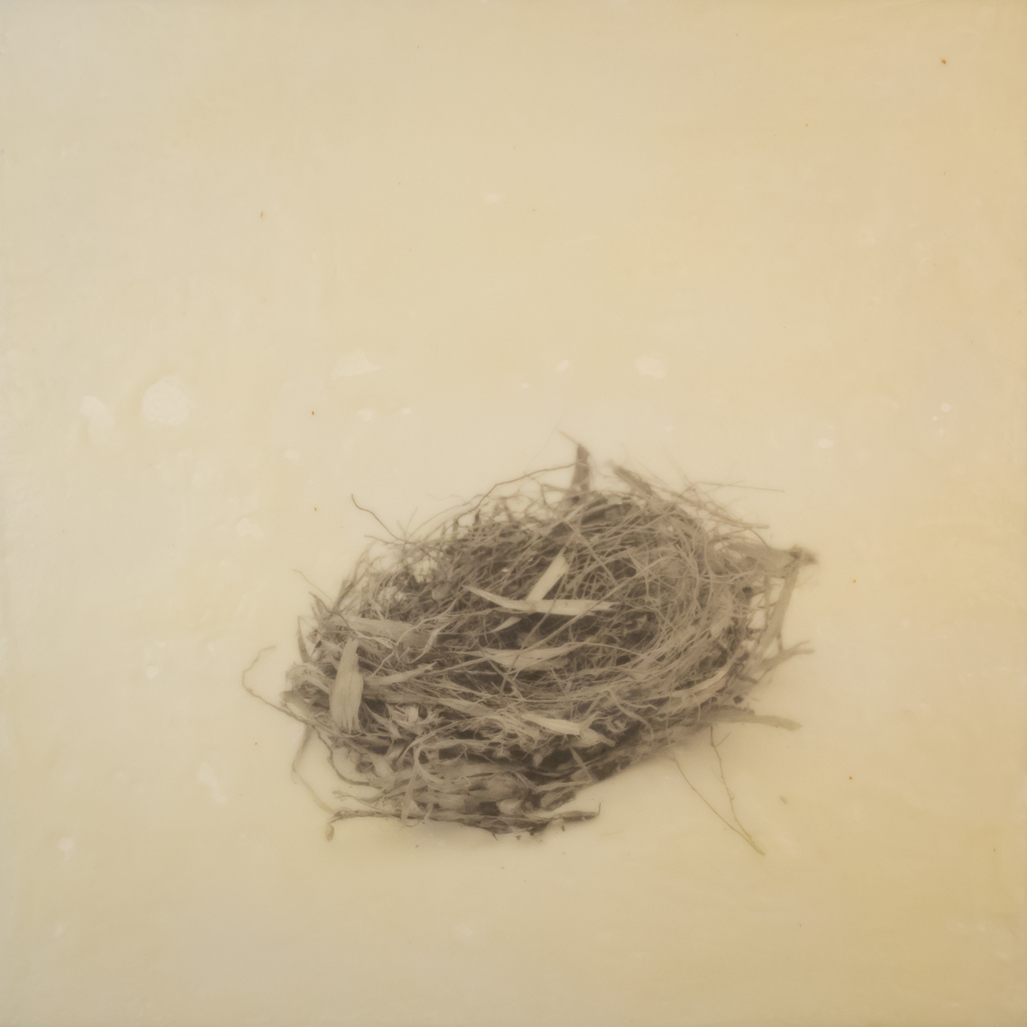 nest_encaustic_7