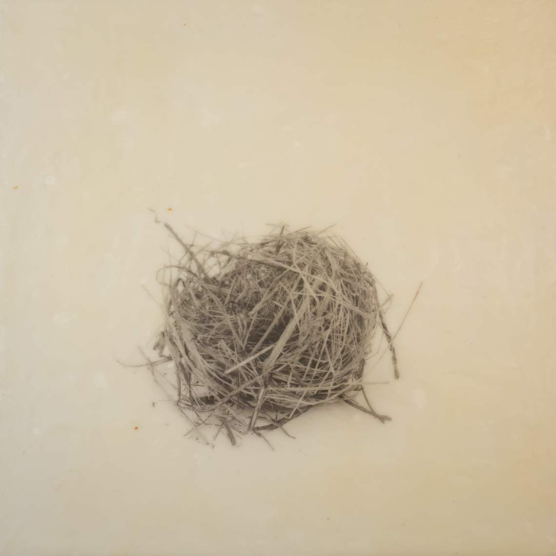 nest_encaustic_8