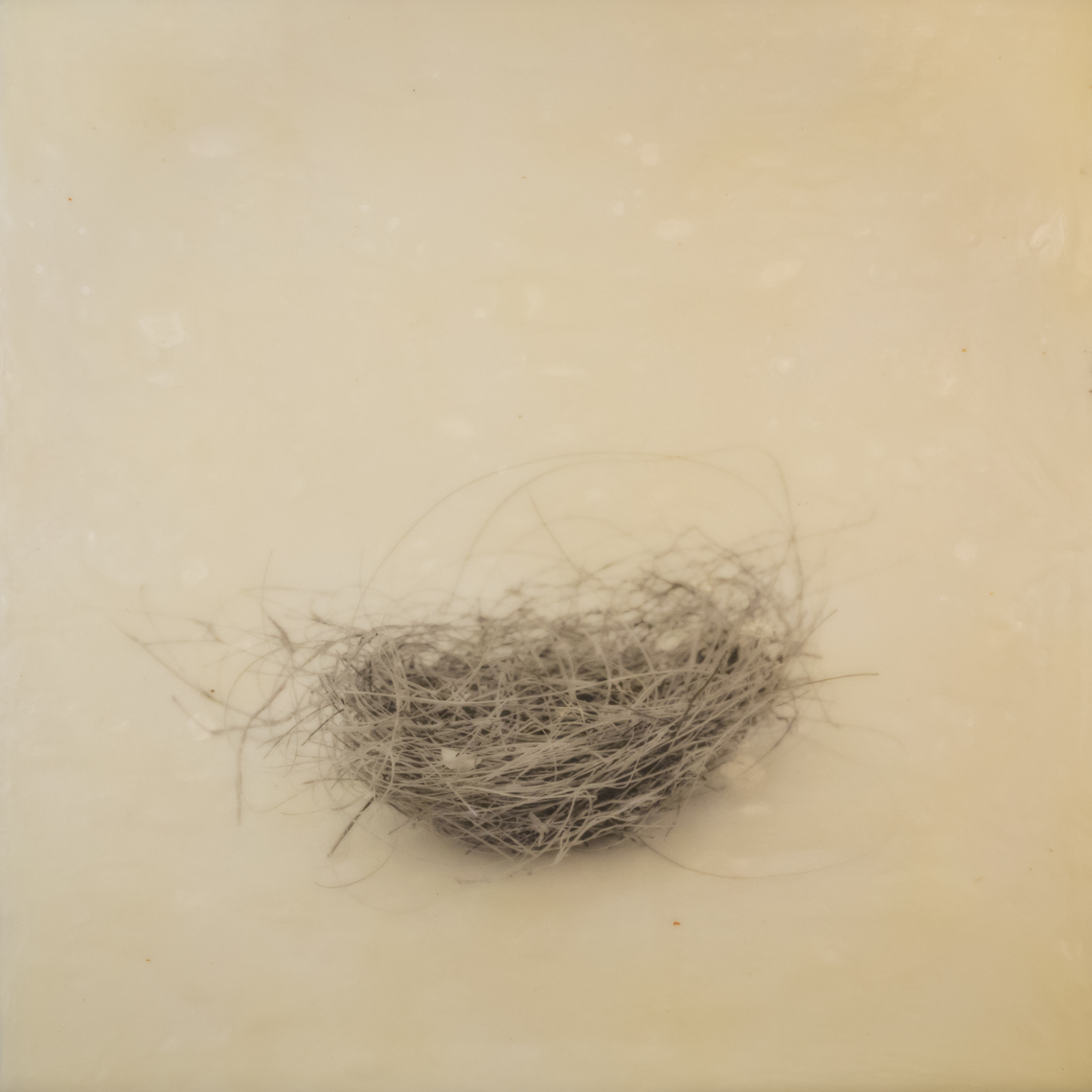 nest_encaustic_9