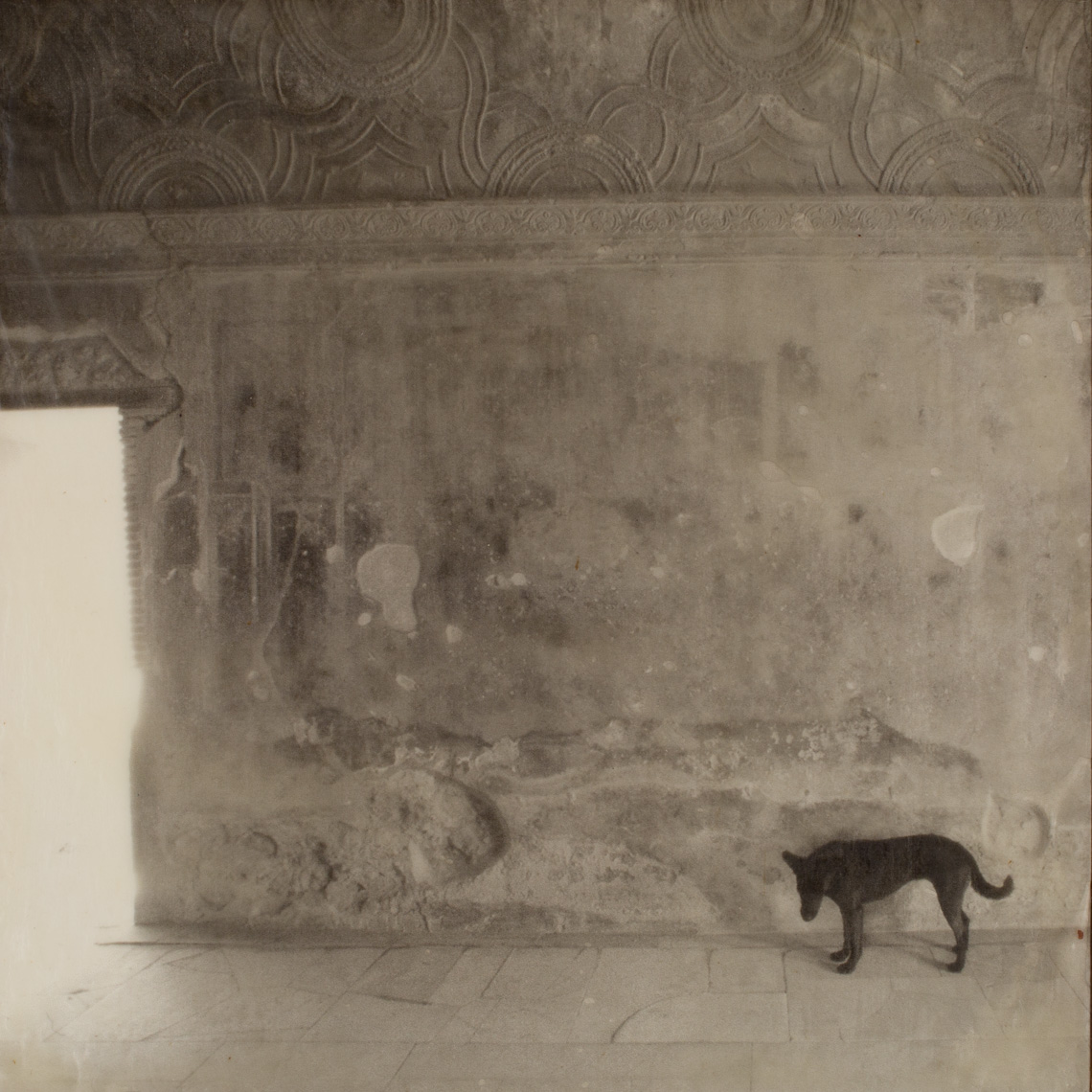Pompeii, Stray Dog